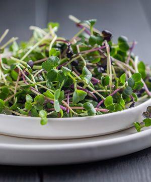 salad-micro