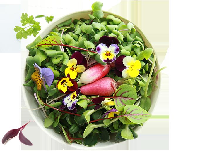 salad-mix_683x517